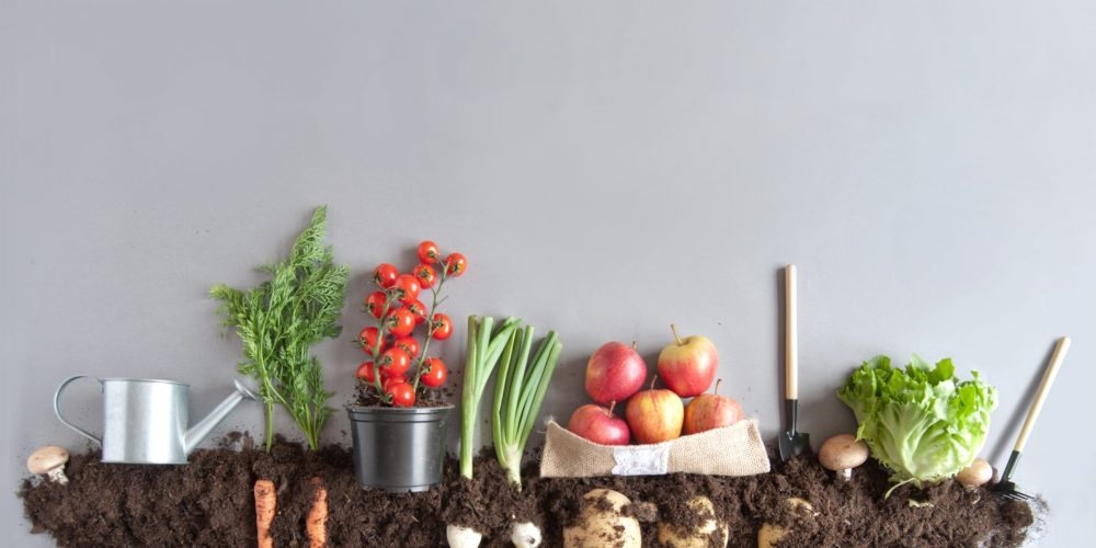 Organic,Fruits,And,Vegetables,Growing,In,Compost